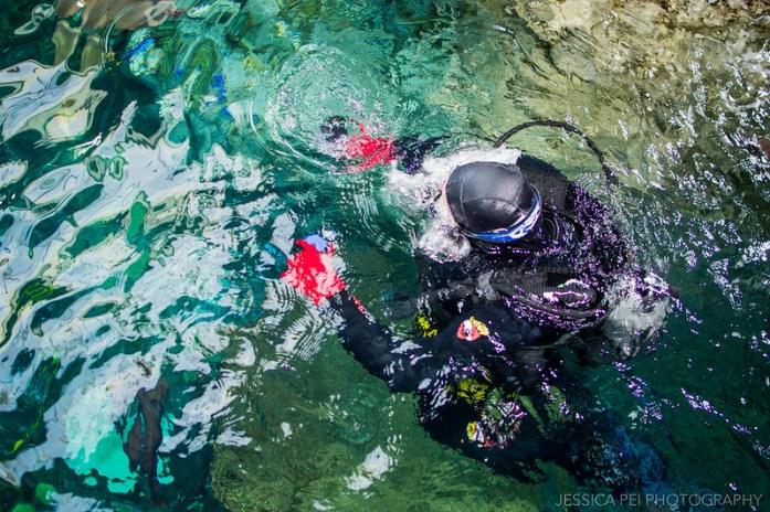 Aquarium of the Pacific Diver
