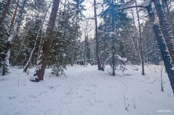 A Bear in the Woods, Stolby National Park, Krasnoyarsk