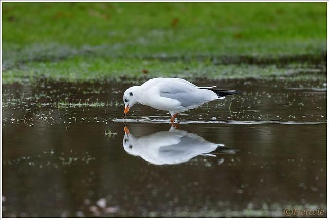 spiegeling (HP002230)