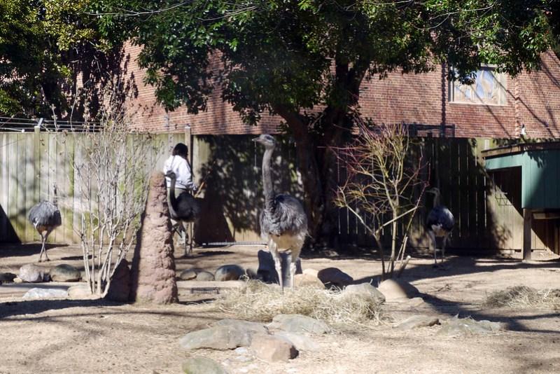 20130304 National Zoological Park, Washington DC 050
