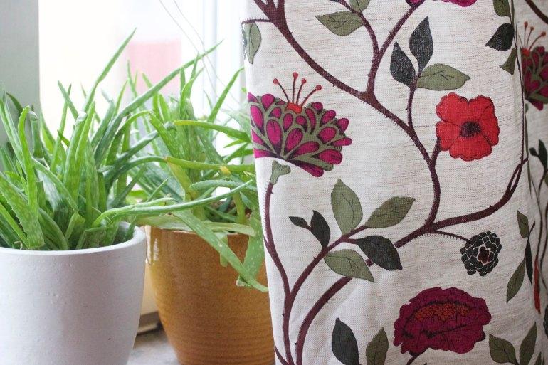 Aloe Vera and curtains