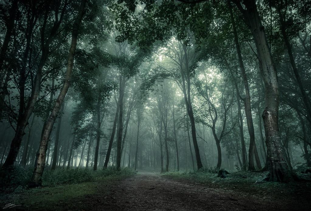 Fall Wooded Wallpaper Dark Woods A Dark Misty Day In Dunnottar Woods