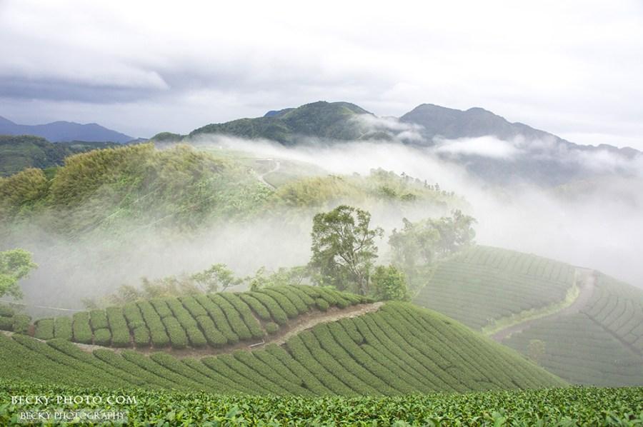 【嘉義】。梅山鄉茶園觀日出『360度大窯山觀日台』深度之旅
