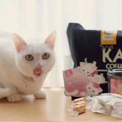 IGや生徒さんなど複数方面からのご助言のおかげで、今年は #猫バッグ getできました♡ . . #カルディ #ネコの日バッグ #nekomikan #みかん #しろねこ #白猫 #whitecat #ペロリ #月曜お休みでヨカッタ♪ #今日から発売だよ
