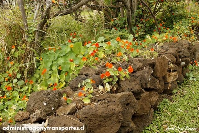 Flores - Isla de Pascua