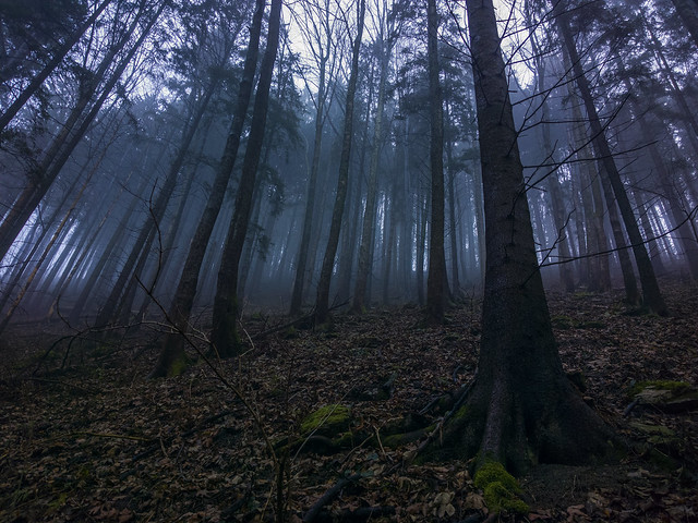Hiking through mist