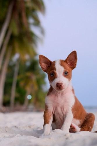 Beach puppy. Siquijor