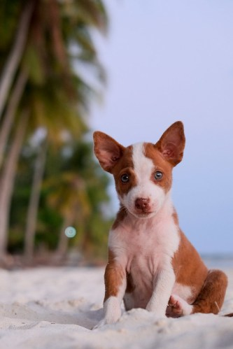Beach puppy. Siquijor