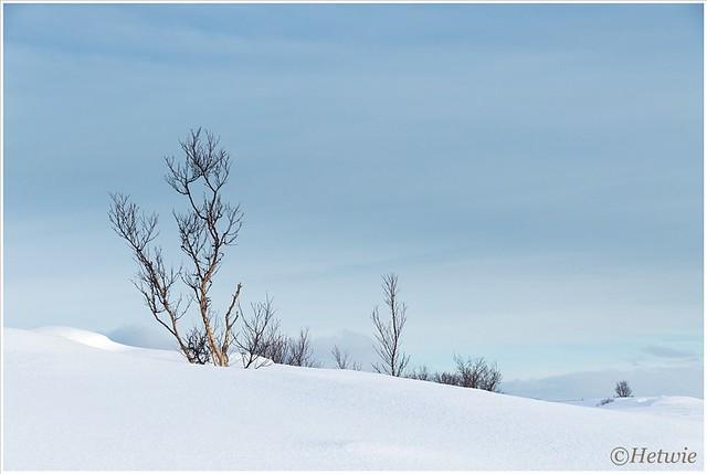 sneeuwlandschap (HP003357)
