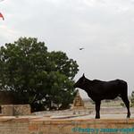 04 Viajefilos en Jaisalmer 07