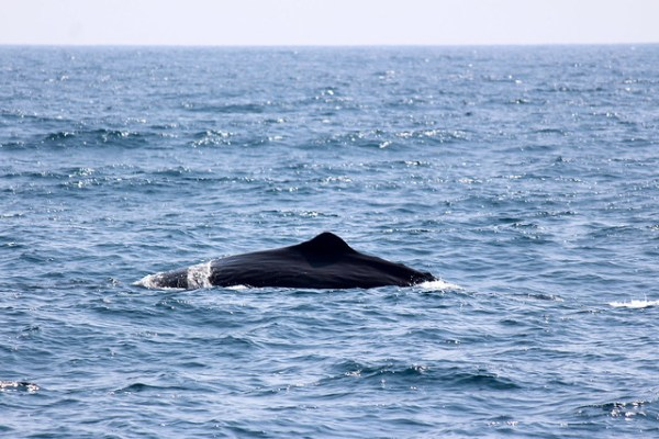 Whale & dolphin watching in Mirissa