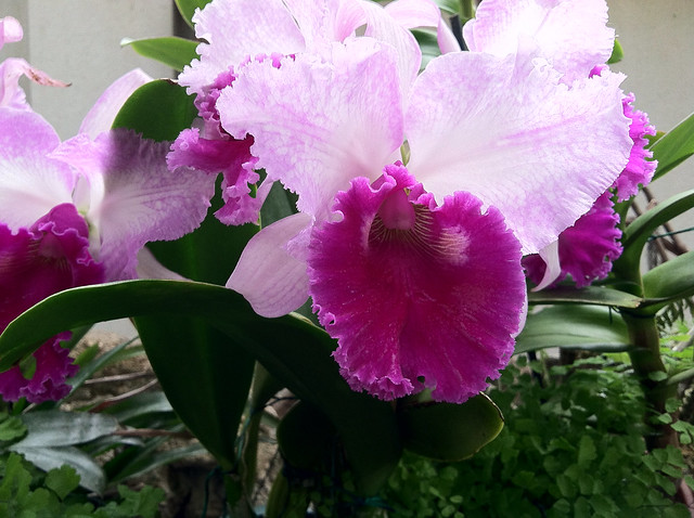 Bright orchids