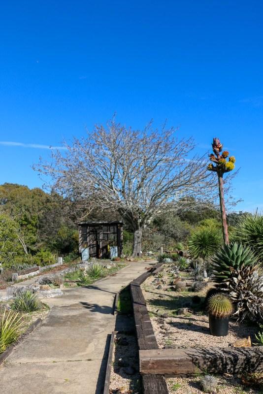 02.20. Santa Cruz Arboretum