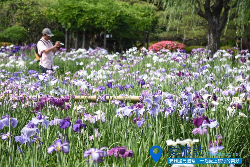 《东京景点推荐》堀切菖蒲园:无料赏花名所,沿途加映紫阳花盛开美景