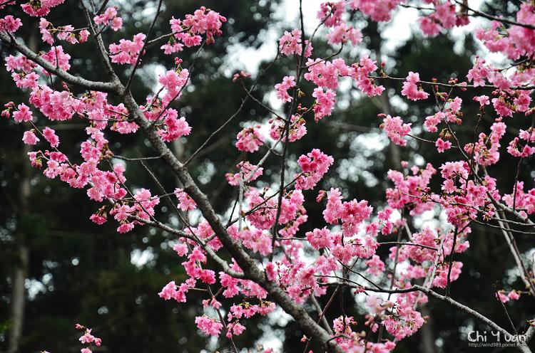 中正紀念堂04.jpg