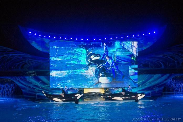 Sea World Orlando Shamu Show