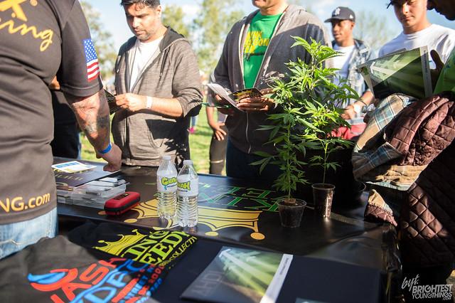042316_Cannabis Festival_006