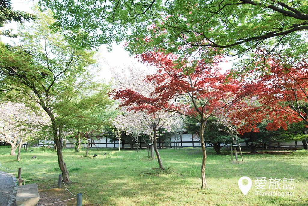 京都赏樱景点 元离宫二条城 33