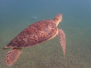Turtle Bay, Akumal, Mexico (April 2016)