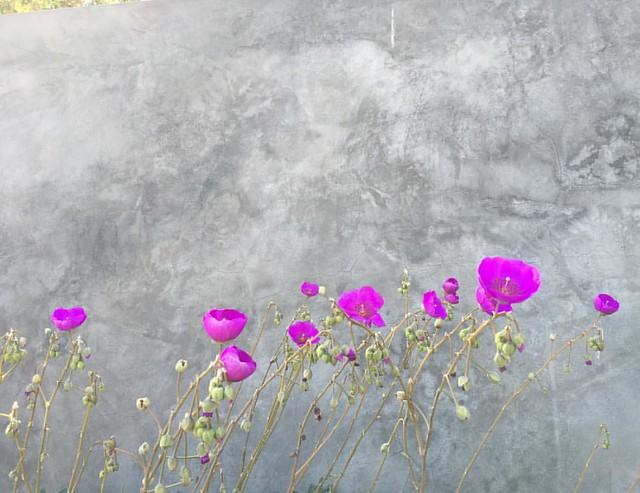 100daysflowers4