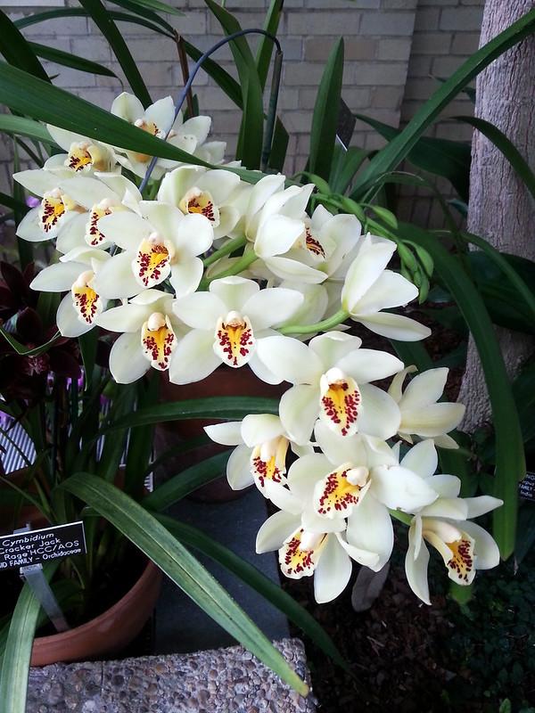 20130307_160151 United States Botanical Garden Conservatory