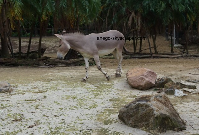 動物園 ロバって美人