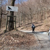 Brumley Mountain Trail to Channels of Virginia