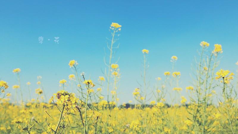 戀花(flowers lover)