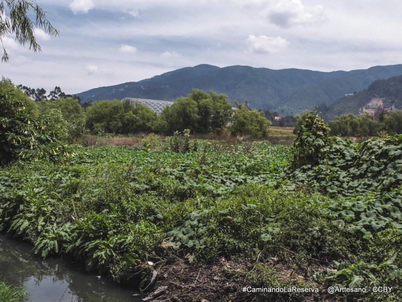 Carpa vecina al Humedal Guaymaral