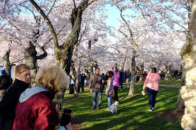 Spring Tourists