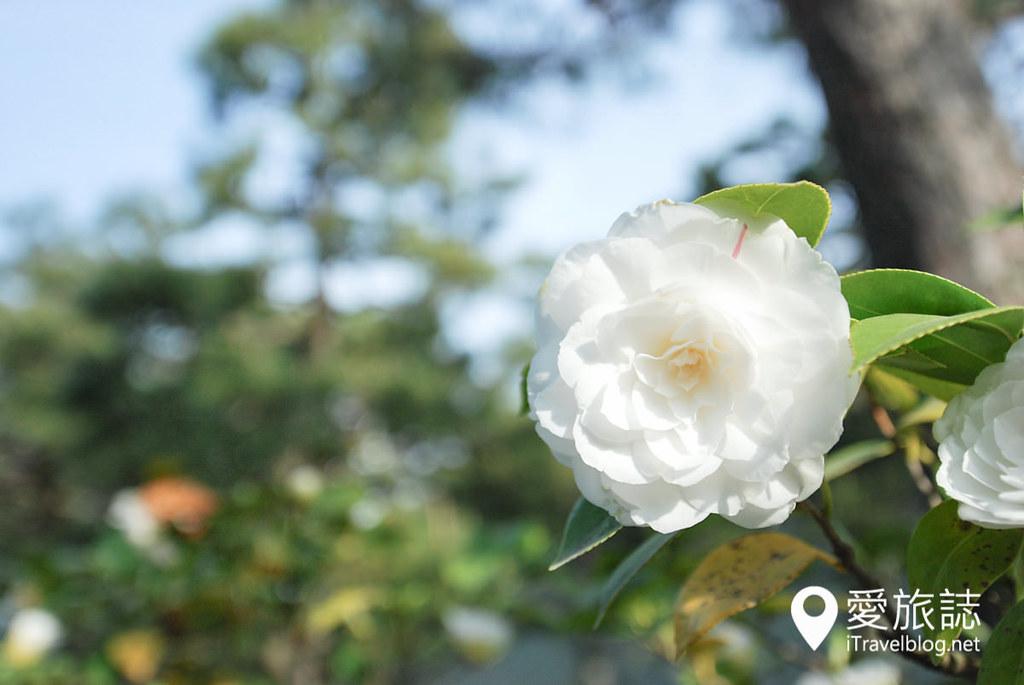 京都赏樱景点 元离宫二条城 29