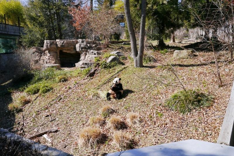 20130304 National Zoological Park, Washington DC 004