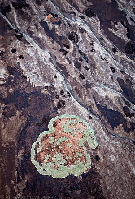 Lichen Spot