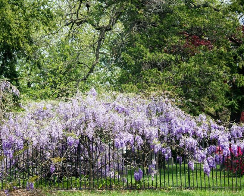 wilmington-brandywine-historical-cemetary-gate-flowers