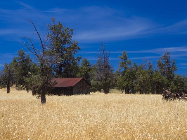 Oregon High Desert in Summer