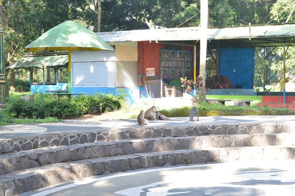 wana-wisata-wendit-monyet