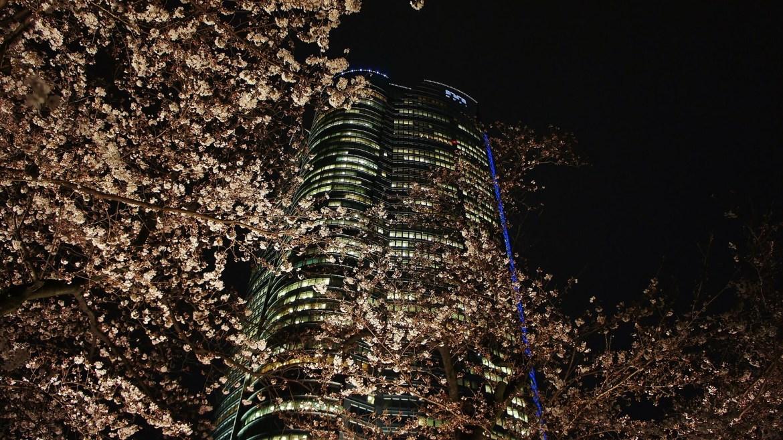 Roppongi Hills Sakura Cherry blossoms