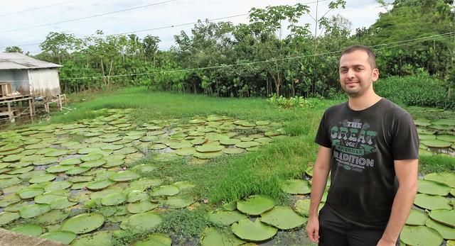 Zaid Amazon Water Lily