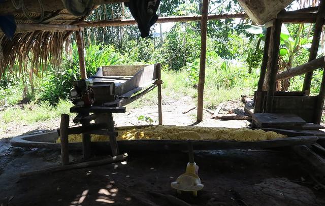 tapioca prepration amazon tribe