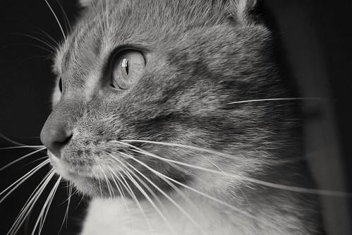 #cat #petlovers