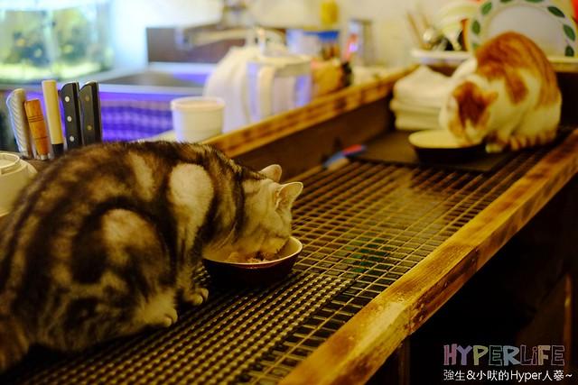 巷子有貓 (34)