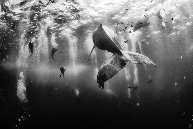 world-whale-day-photos-21__880
