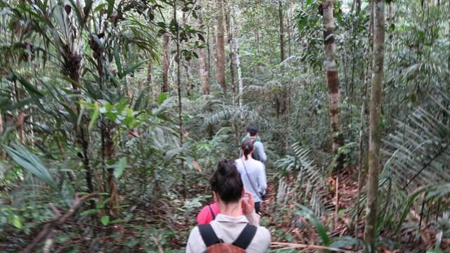 trekking into the amazon rainforest from tupana lodge