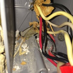 Dimmer Switch No Neutral Wire Animal Bones Diagram Ground Not Attached Exposed Hot And Do