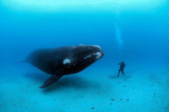 world-whale-day-photos-261__880
