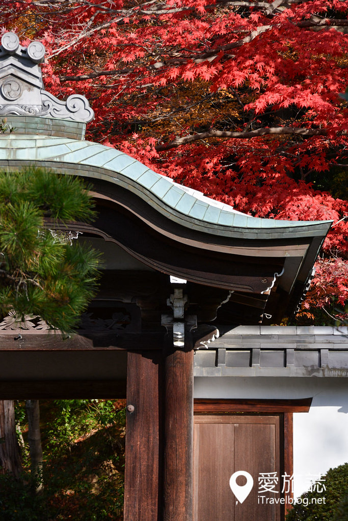 《京都赏枫景点》荣摄院:韵味十足的无料红叶小天地