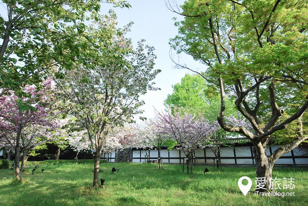 京都赏樱景点 元离宫二条城 34