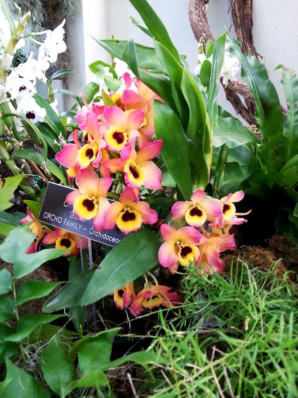 20130307_160708 United States Botanical Garden Conservatory