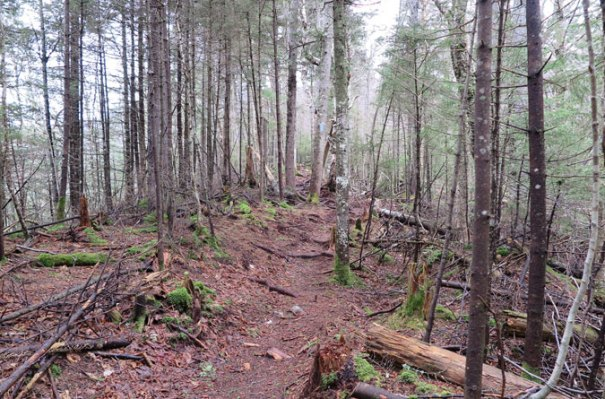 Gale River Trail Relocation