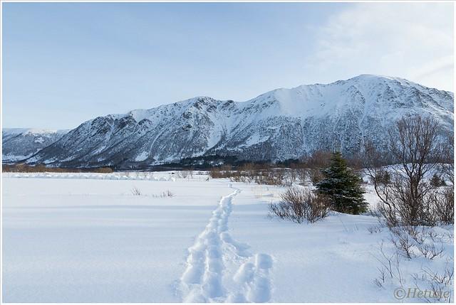 sneeuwschoenspoor (HP003414)